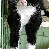 Adopt A Pet :: Selena - Island Park, NY