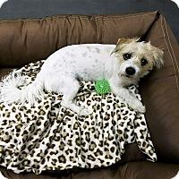 Adopt A Pet :: Rusty - Tavares, FL