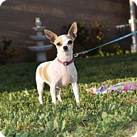 Adopt A Pet :: Pixie - Rosamond, CA