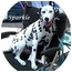 Photo 2 - Dalmatian Dog for adoption in Mandeville Canyon, California - Sparkle