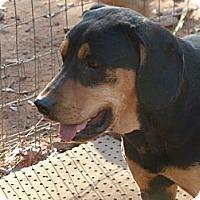 Adopt A Pet :: Sophie - E Windsor, CT