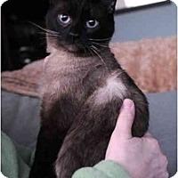 Adopt A Pet :: Ting Ting - Columbus, OH
