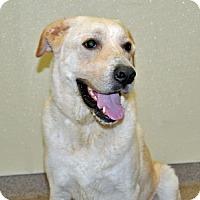Adopt A Pet :: Rocket - Port Washington, NY