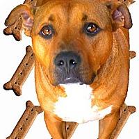 Adopt A Pet :: Stetson mellow - Sacramento, CA