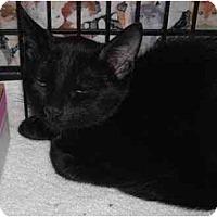 Adopt A Pet :: Nancy - Colmar, PA