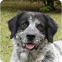 Adopt A Pet :: Hunter - Mocksville, NC
