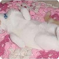 Adopt A Pet :: Jerico - Franklin, NC