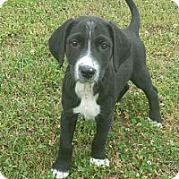 Adopt A Pet :: Griffin - Plainfield, CT