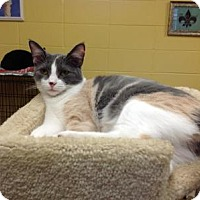 Adopt A Pet :: Glenda - Lake Charles, LA