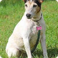 Adopt A Pet :: Missy - Conyers, GA