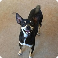 Adopt A Pet :: George - Post, TX