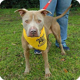 Terrier (Unknown Type, Medium) Mix Dog for adoption in McCormick, South Carolina - Ari