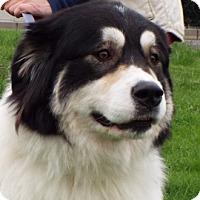 Adopt A Pet :: Toast - Grants Pass, OR