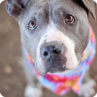 Adopt A Pet :: Mona - Southampton, PA