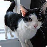 Adopt A Pet :: Inky - Michigan City, IN