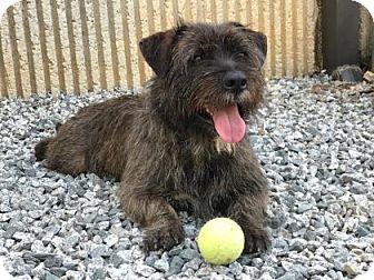 Terrier (Unknown Type, Medium) Mix Dog for adoption in Greensboro, North Carolina - Kentucky