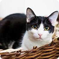 Adopt A Pet :: Margo aka Dulce - Incline Village, NV