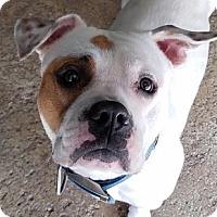 Adopt A Pet :: Jackson - Douglasville, GA