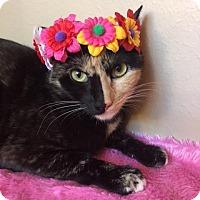 Adopt A Pet :: Mia - Pasadena, TX