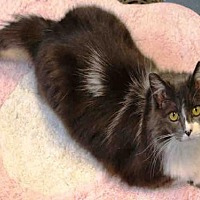 Adopt A Pet :: JILLIAN - Hampton Bays, NY