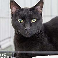 Adopt A Pet :: Mr. Magoo - Merrifield, VA