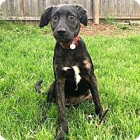 Adopt A Pet :: PUPPY MARLA - Sussex, NJ