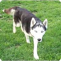 Adopt A Pet :: Ace - Belleville, MI