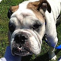 Adopt A Pet :: Cooper - Strongsville, OH