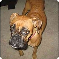 Adopt A Pet :: Rylee - Albany, GA