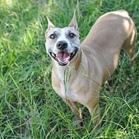 Terrier (Unknown Type, Medium) Mix Dog for adoption in Jackson, Mississippi - Cleopatra