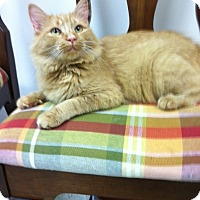 Adopt A Pet :: Blonde - Trevose, PA