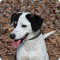 Adopt A Pet :: Jack - Harrisonburg, VA