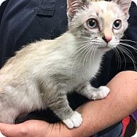 Adopt A Pet :: Candy - Mustang, OK