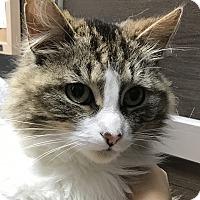 Adopt A Pet :: Mouse - Toronto, ON
