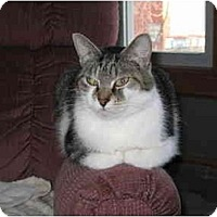 Adopt A Pet :: Gulliver - North Boston, NY