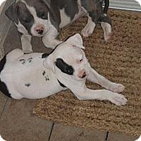 Adopt A Pet :: Chunky Monkey,sweetie pie - Sacramento, CA