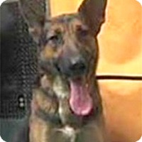 Adopt A Pet :: Ashlyn needs foster - Sacramento, CA