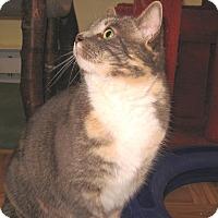 Adopt A Pet :: Lulu (Schatzi) - Colmar, PA