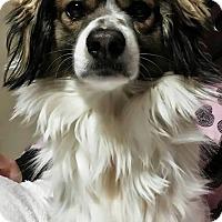 Adopt A Pet :: Jackpot - Fowler, CA
