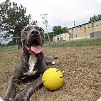 Adopt A Pet :: BLUE - Van Wert, OH