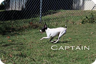 Chihuahua/Terrier (Unknown Type, Small) Mix Dog for adoption in Texarkana, Arkansas - Captain