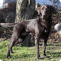 Adopt A Pet :: Jack - Ile-Perrot, QC