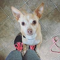 Adopt A Pet :: Panko - Santa Barbara, CA