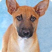 Adopt A Pet :: Baby Snapdragon - Encinitas, CA