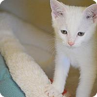 Adopt A Pet :: Mercury - San Leon, TX