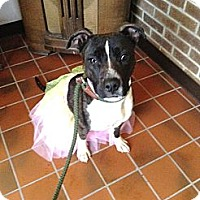 Adopt A Pet :: #510-13 RESCUED! - Zanesville, OH