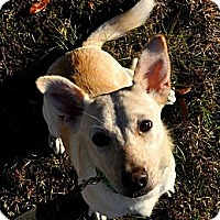 Adopt A Pet :: Lucy Mae - Tallahassee, FL