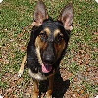 Adopt A Pet :: Duke - Green Cove Springs, FL