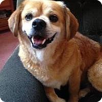 Adopt A Pet :: Chumlee - Morgantown, WV