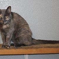 Adopt A Pet :: Budda - Roseville, CA